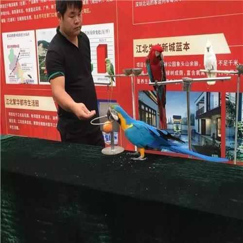 天长市海狮表演出策划方案