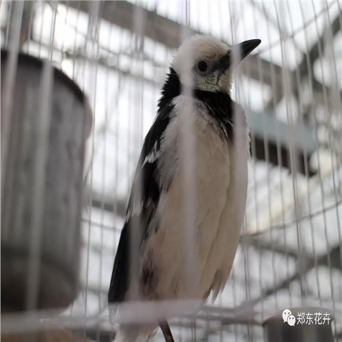 西峡县百鸟展出租收费情况怎样