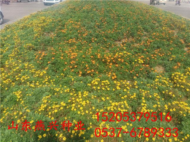 邊坡草籽多少錢斤
