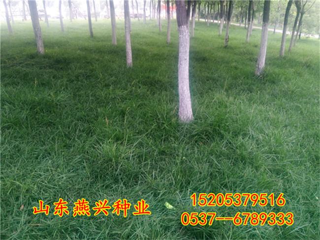 重慶永川區草籽護坡如何栽種