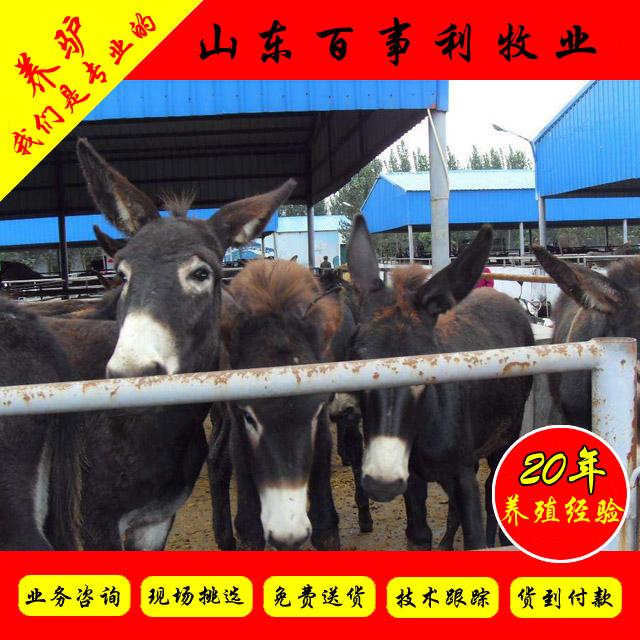 南通崇川区养驴场