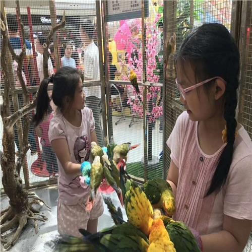 灵丘县马戏团表演项目