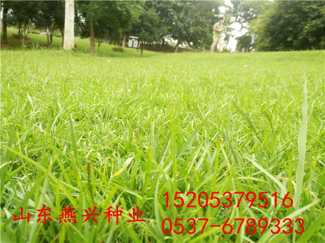 江蘇鎮江市小區綠化用什么草種子好