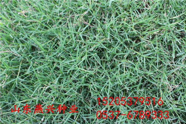 淮北市護坡草種子有哪些
