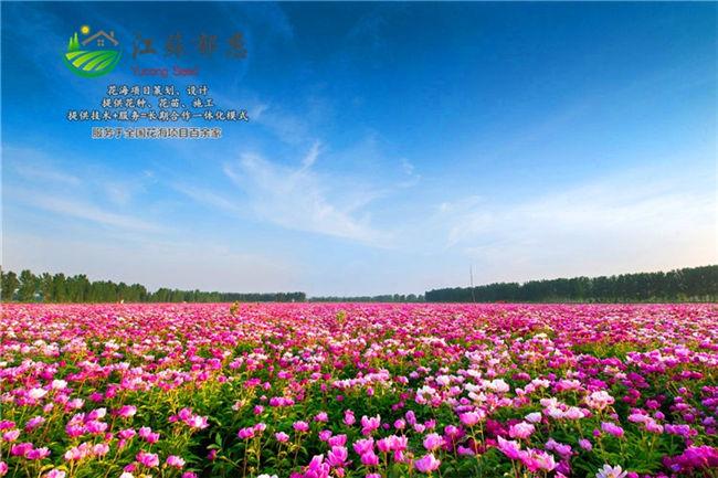 安庆市花海旅游公司承接服务
